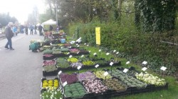 Nationale Plantenbeurs Hombeek
