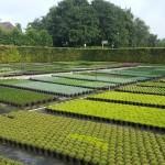 De kwekerij - Philip van Hilst